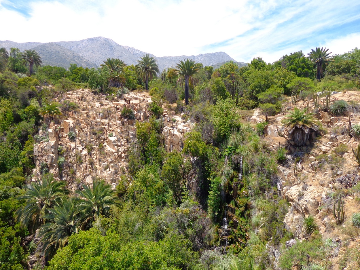 La Campana National Park Palm Tree Grove & Cascade
